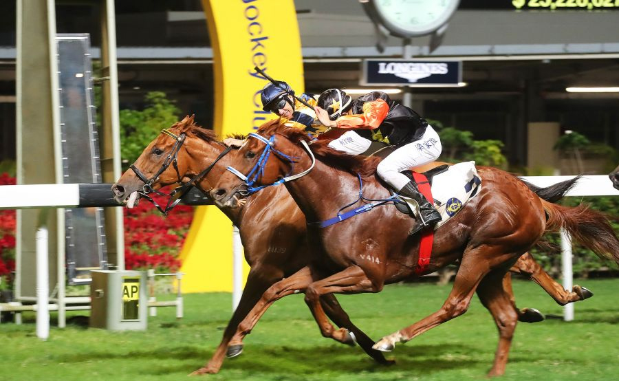 horse-race11