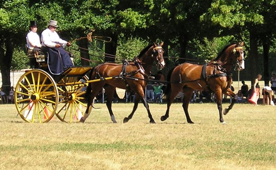 tandem-horses